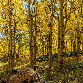 by Jeremy Elliott - Landscapes Forests (  )