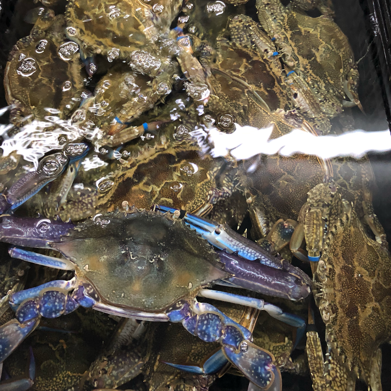 D&K Live Seafood - Seafood Wholesaler in Footscray