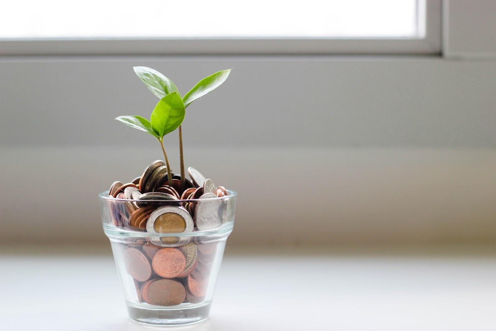 Money in a pot with a plant on top