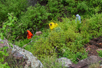 Photo: Group descends to base of Lichen Falls; PEEC Waterfall Hike
