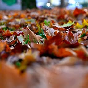 Foillage by Luigi Alloni - Uncategorized All Uncategorized ( leaves autumn selective colors g.hostbuster )