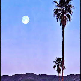 Moon over the mountains by Rosemary Gamburg - Landscapes Deserts ( #palmtree #fullmoon #mountains #palmsprings #california #eveningglow )