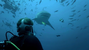 Surrounded by Sharks thumbnail