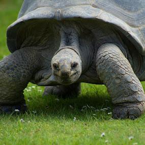 Big and strong by Tiffany Hibbins - Animals Reptiles