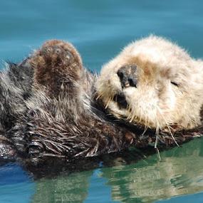 Mr.Otter by Kathlene Moore - Animals Sea Creatures