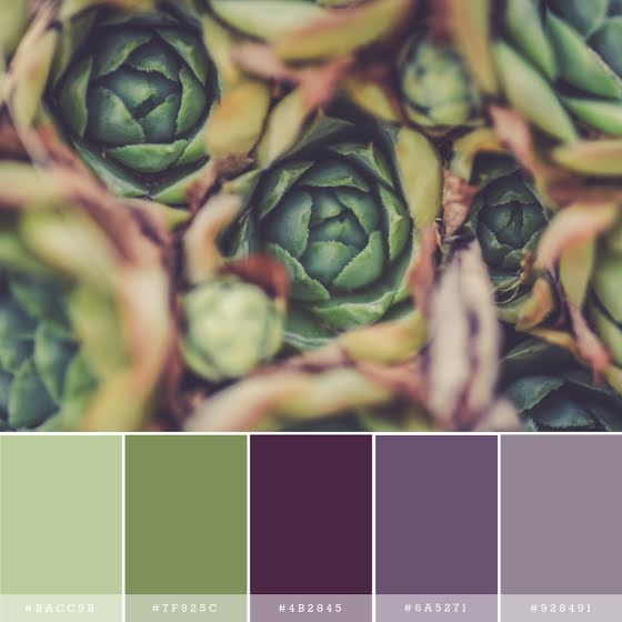 Succulent Palette - Instagram Post Template