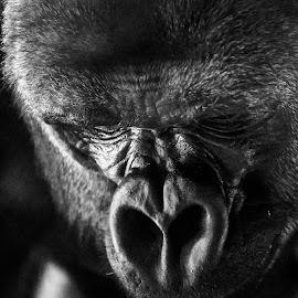At the Zoo by Vinny Kane - Uncategorized All Uncategorized (  )