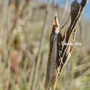 Sperry's Grass-Veneer