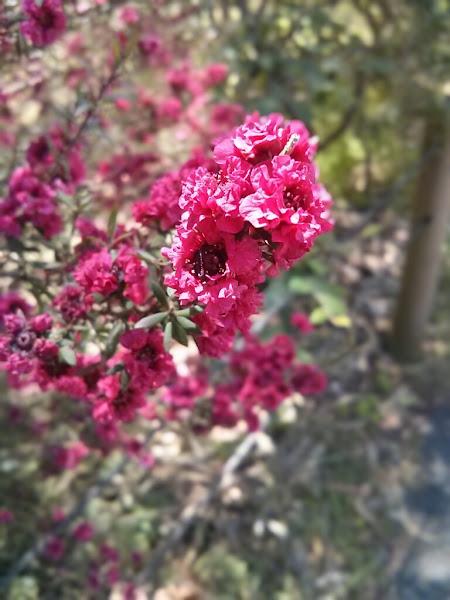 Photo: A 'Nexus' Flower