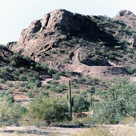 arizona desert by Dustin Wilcox - Novices Only Landscapes ( desert, mountain, arizona, cactus )