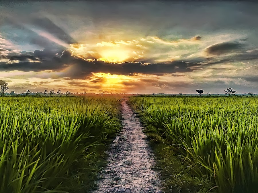 Sunset Sore Ini by Randi Pratama M - Instagram & Mobile Android ( field, hdr, sunset, indonesia, huawei,  )