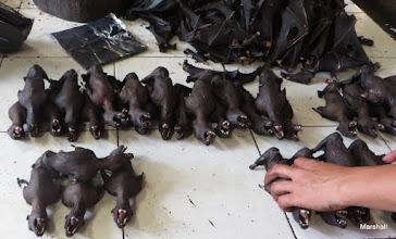 Photo: Bats for dinner
