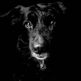 Emotions  by Jazz Photography - Animals - Dogs Portraits ( dogs, dog, portraits, pwc84, Dogs, Cats, Pets, Rabbits, Animals, pet, livestock, cows, #GARYFONGPETS, #SHOWUSYOURPETS )