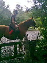 Photo: Kyra mee naar stal
