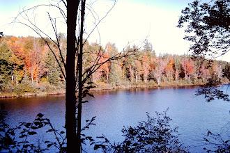 Photo: Fall color.
