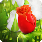 My Rose 3D live wallpaper Icon
