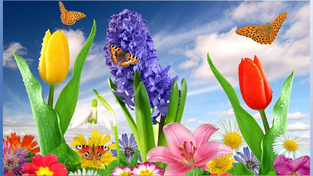 nice flower wallpapers  android apps on google play, Beautiful flower