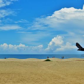 Alappuzha Beach by Chirag Gupta - Landscapes Beaches ( calm, blue sky, serene, india, beach, kerela )