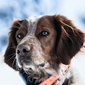 Animal World Dogs Wallpapers icon