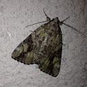 Little Nymph Underwing Moth