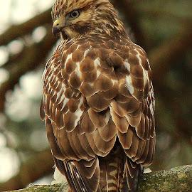 by Missy Grove Horne - Animals Birds