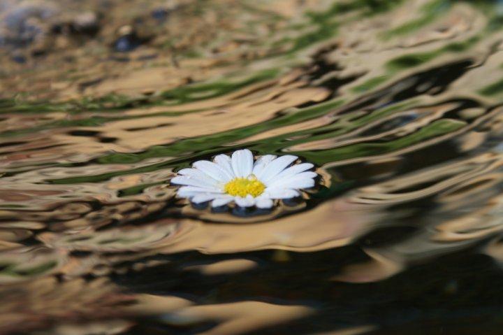 Af...fior d'acqua di AnnaMaria