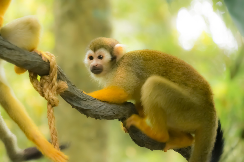 Singapore River Safari Squirrel Monkey Forest1
