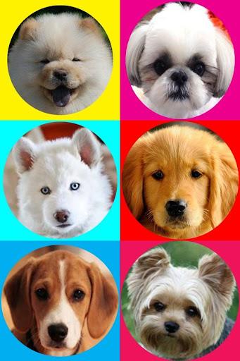 강아지의 상점|玩休閒App免費|玩APPs