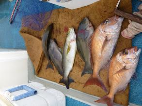 Photo: 釣果発表! まずはクマガイさん。さっきのイケスの中の魚をシメてます。