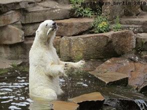 Photo: Hmpff, ein Querschlaeger namens Fisch :-)