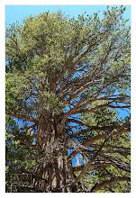 Photo: Eastern Sierras-20120716-467