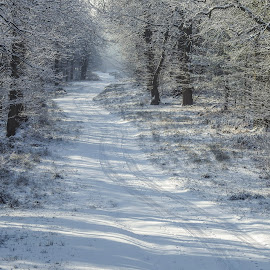 Winter road by Yordan Mihov - Landscapes Forests ( forest, road, snow, winter, trees )