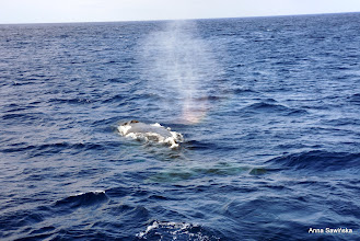 Photo: Whales passing by and making rainbows :]