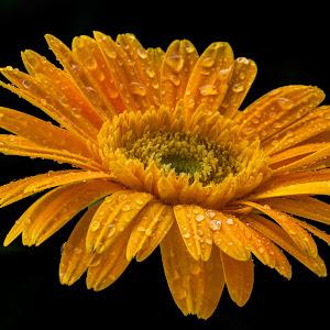 pix flower 4.jpg