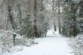 Photo: The first snow fall of 2013 covers Ashenground Wood