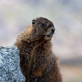 by Eric Abbott - Animals Other Mammals