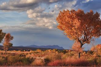 Photo: Bosque colors