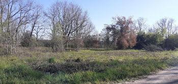 terrain à Montricoux (82)