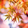 Beautiful Autumn Live Wallpaper APK