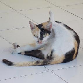 Tatapan Heran by Imanuel Monggesang - Animals - Cats Playing ( cat )