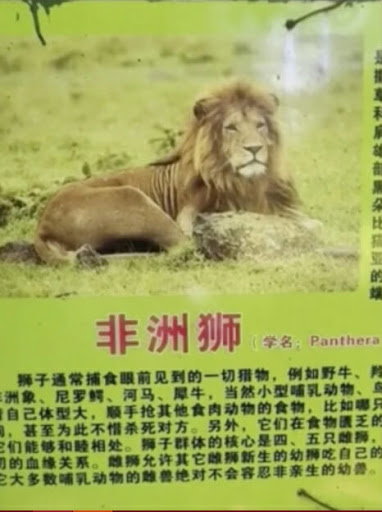Innocent Golden Retriever 'Replaces' African Lion At China Zoo Leaving Visitors Confused