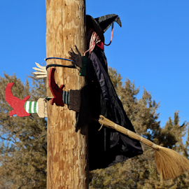 Whoops! by Tony Huffaker - Public Holidays Halloween ( halloween, navigational, telephone pole, witch, error )