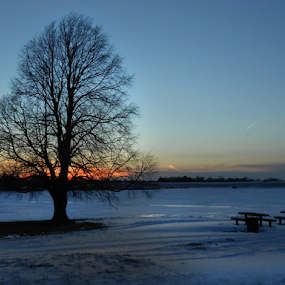 Frozen Lakes by Gayle Mittan - Landscapes Waterscapes ( icy lake, dusk, february, tree, frozen, winter, ice, nebraska, tracks, picnic table, bare tree, blue, snow tracks, snow, sunset, ice covered, lake, holmes lake )