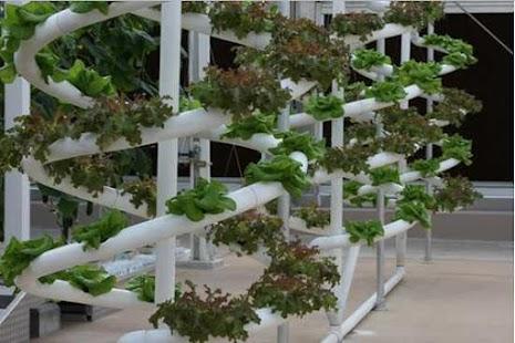 diy hydroponics system screenshot thumbnail