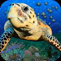 Popar Sea Life