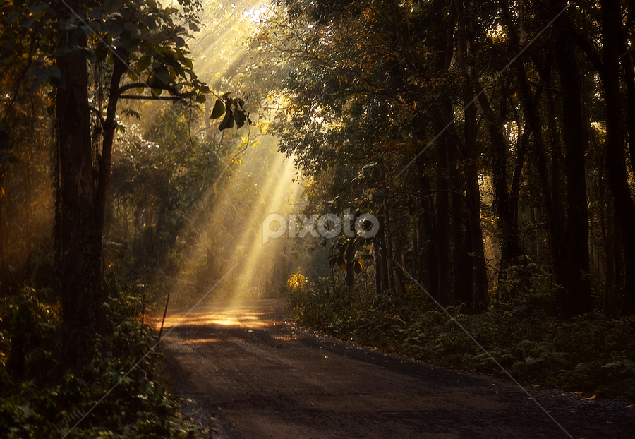 by Gourab Mitra - Landscapes Forests ( nature, path, morning, light, rays, pwcpaths )