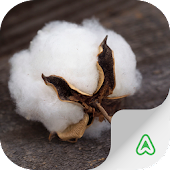 Cotton Pests