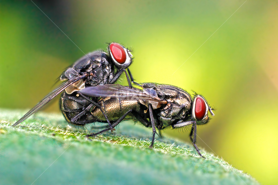 hufft bulan puasa woiiii by Miswar Rasyid - Animals Insects & Spiders