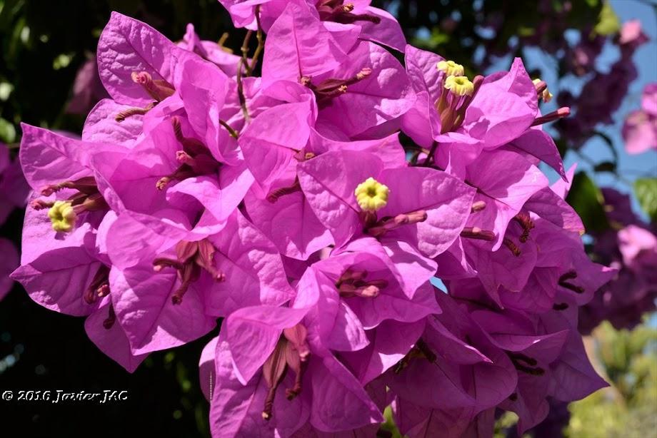 Foto Jardín botánico Fundación Sales 4