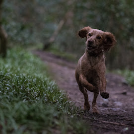 Doggo by Bearded Egg - Animals - Dogs Playing ( pets, domestic, doggo, playing, dog )